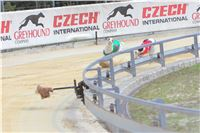 06_Chrti_dostihy_Greyhound_Racing_Park_Praha_Bookmakers_CuP_IMG_0078.jpg