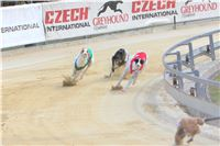 06_Chrti_dostihy_Greyhound_Racing_Park_Praha_Bookmakers_CuP_IMG_0080.jpg