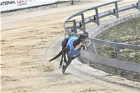 06_Chrti_dostihy_Greyhound_Racing_Park_Praha_Bookmakers_CuP_IMG_0082.jpg
