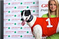 06_Chrti_dostihy_Greyhound_Racing_Park_Praha_Bookmakers_CuP_IMG_0089.jpg