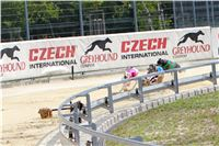 07_Chrti_dostihy_Greyhound_Racing_Park_Praha_Bookmakers_CuP_IMG_9920.jpg