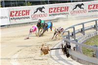 07_Chrti_dostihy_Greyhound_Racing_Park_Praha_Bookmakers_CuP_IMG_9921.jpg