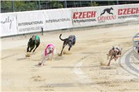07_Chrti_dostihy_Greyhound_Racing_Park_Praha_Bookmakers_CuP_IMG_9923.jpg