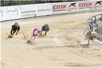 07_Chrti_dostihy_Greyhound_Racing_Park_Praha_Bookmakers_CuP_IMG_9924.jpg