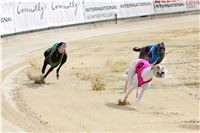 07_Chrti_dostihy_Greyhound_Racing_Park_Praha_Bookmakers_CuP_IMG_9925.jpg