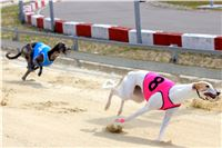 07_Chrti_dostihy_Greyhound_Racing_Park_Praha_Bookmakers_CuP_IMG_9927.jpg