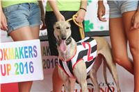 07_Chrti_dostihy_Greyhound_Racing_Park_Praha_Bookmakers_CuP_IMG_9970.jpg