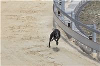 08_Chrti_dostihy_Greyhound_Racing_Park_Praha_Bookmakers_CuP_IMG_0125.jpg
