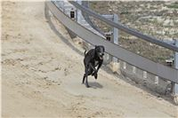 08_Chrti_dostihy_Greyhound_Racing_Park_Praha_Bookmakers_CuP_IMG_0126.jpg