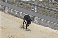08_Chrti_dostihy_Greyhound_Racing_Park_Praha_Bookmakers_CuP_IMG_0128.jpg