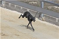 08_Chrti_dostihy_Greyhound_Racing_Park_Praha_Bookmakers_CuP_IMG_0129.jpg