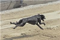 08_Chrti_dostihy_Greyhound_Racing_Park_Praha_Bookmakers_CuP_IMG_0136.jpg