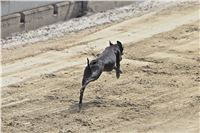 08_Chrti_dostihy_Greyhound_Racing_Park_Praha_Bookmakers_CuP_IMG_0137.jpg