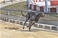 08_Chrti_dostihy_Greyhound_Racing_Park_Praha_Bookmakers_CuP_IMG_0143.jpg