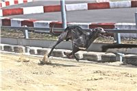 08_Chrti_dostihy_Greyhound_Racing_Park_Praha_Bookmakers_CuP_IMG_0144.jpg