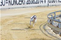 08_Chrti_dostihy_Greyhound_Racing_Park_Praha_Bookmakers_CuP_IMG_0146.jpg