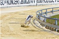 08_Chrti_dostihy_Greyhound_Racing_Park_Praha_Bookmakers_CuP_IMG_0147.jpg