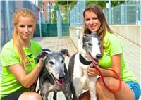 09_Chrti_dostihy_Greyhound_Racing_Park_Praha_Bookmakers_CuP_DSC07828_u.jpg