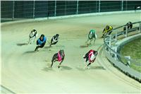 Chrt_Dostihy_Night_Greyhound_Racing_Park_Motol_Prague_CGDF.jpg