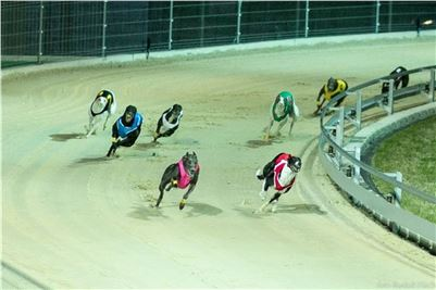 Chrt_Dostihy_Night_Greyhound_Racing_Park_Motol_Prague_CGDF_Rozhovor.jpg