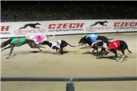 Prague_Night_Greyhound_Race_Greyhound_Park_Motol_CGDF_rozhovor.jpg