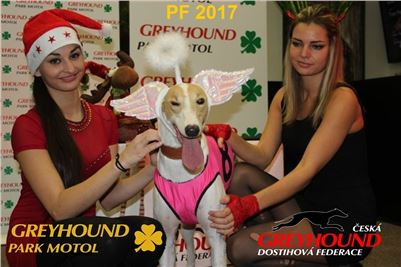 Chrt_dostihy_PF_2017_Greyhound_Racing_Park_Motol_CGDF_Vuitton_r.jpg