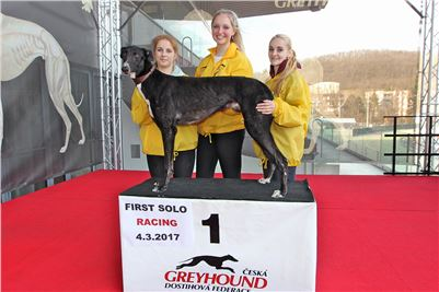 Chrt_dostihy_First_Racing_Greyhound_Park_Motol_CGDF_IMG_3263.JPG