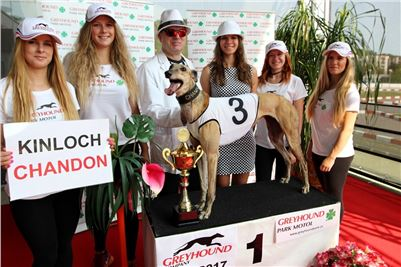 Chrti_dostihy_winner_Greyhound_Company_Cup_Racing_Prague_CGDF (3).JPG