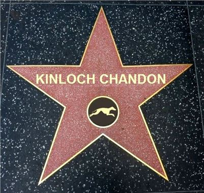 Chrt_dostihy_Oskari_akce_Golden_Awards_Greyhound_Park_Motol_star_KINLOCH CHANDON.jpg